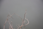 gray_branches_web-002